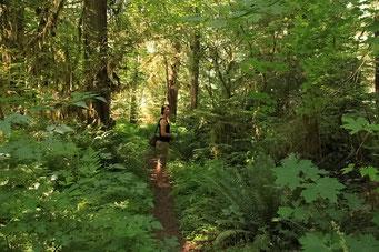Spaziergang durch den üppigen Wald