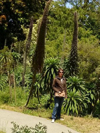 Riesige Pflanzen im Botanischen Garten