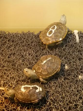 Georgia Sea Turtle Center, Jekyll Island, GA, USA