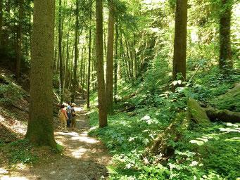 Urwald auf dem Sonnenberg - Wolfsschucht
