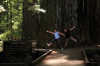 So breit können die Redwood's werden...