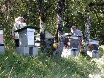 Les abeilles avaient-elles déjà commencé à piquer?