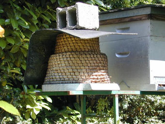 Au rucher de Raymond Coutisson à Serrières de Briord