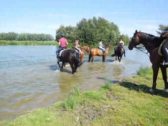 Paarden even lekker pootje baden.