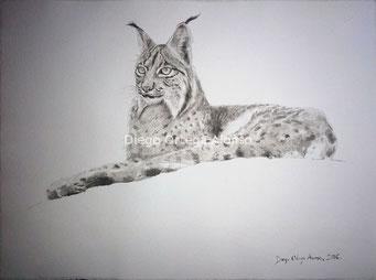 Señorío. Tinta china sobre papel Garzapapel. 40x30 cm. 2016