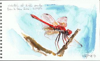 Sympentrum sanguineum. Acuarela sobre papel Arches. 25X15. 2014