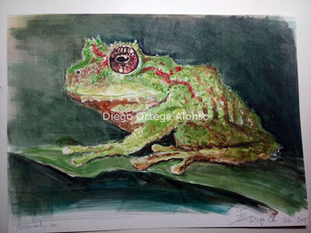 Pristimantis roni. Acuarela sobre papel. 40x30 cm. 2015