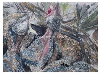 Los guacharros del mojino (nido de Cyannopica cooki). Acuarela y gouache sobre papel. 46X32,5. 2014