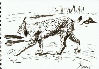 Apunte del natural de Lince Ibérico. Tinta china sobre papel. 29,7x21. 2014