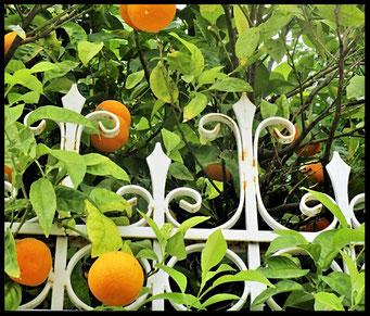 Houten Nestkastje voor Pindakaas pot , Nestkastje, thema, Grieks stijl Vogelhuisje bouwen, vogelhuisje pindakaas pot, huisje Grieks stijl_19