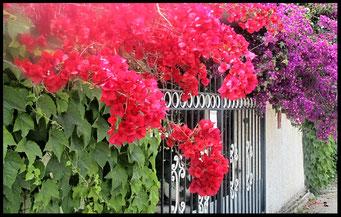 Houten Nestkastje voor Pindakaas pot , Nestkastje, thema, Grieks stijl Vogelhuisje bouwen, vogelhuisje pindakaas pot, huisje Grieks stijl_9