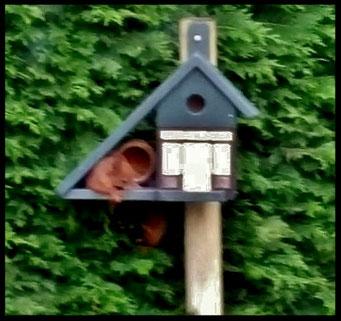Houten Nestkastje voor Pindakaas pot , Nestkastje, thema, Vogelhuisje bouwen, vogelhuisje pindakaas pot_24
