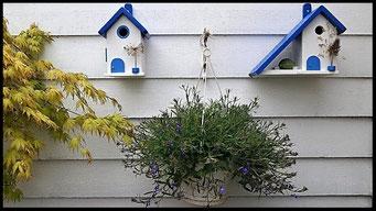 Houten Nestkastje voor Pindakaas pot , Nestkastje, thema, Grieks stijl Vogelhuisje bouwen, vogelhuisje pindakaas pot, huisje Grieks stijl_38