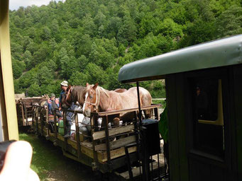 "Szene ""Wild-West"" in Rumänien"