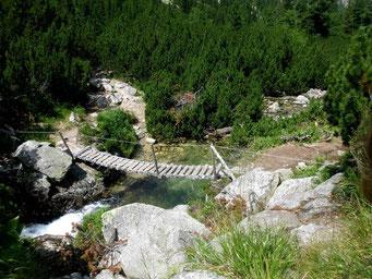 Trekking durch Europas letzte Urwälder.