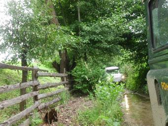 Kleiner Fluss dient als Waldweg.