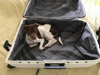 30.05.2017 -  Bilu möchte auch mit verreisen ;-)