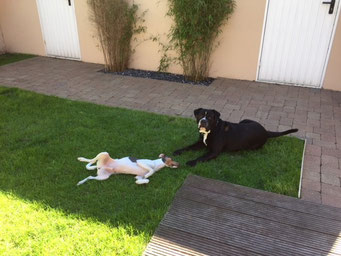 05.05.2018 - Barclay mit seinem Freund Neo im Garten