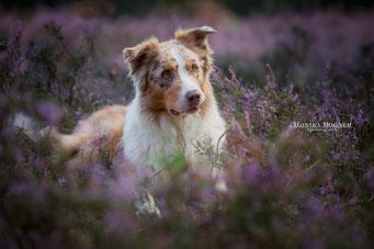 Hunde Fotoshootings