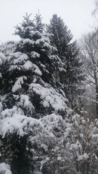 Winter im Waldgarten