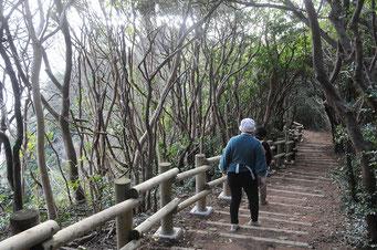 自然豊かな神島を一周すると体も心もリフレッシュされます。