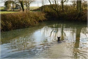 ook midden in de winter is Dido dol op zwemmen...