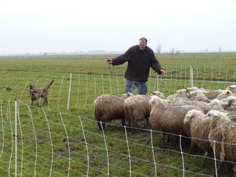 aanlegtest schapenhoeden