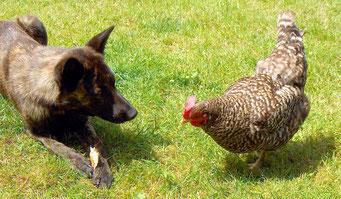 Dido verdedigt haar kluifje