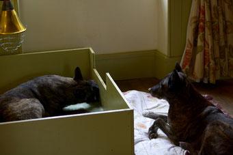 dag 13 Oma Dido is bezig met haar liefdesoffensief... ze wil ook zo graap pups verzorgen.