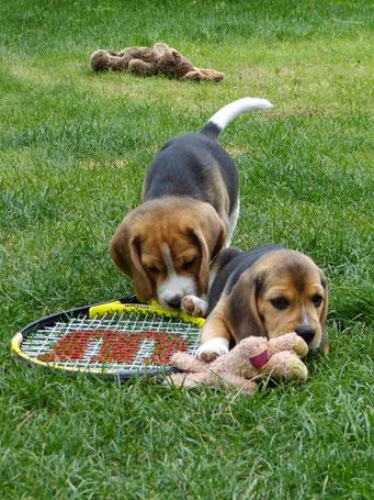 Ambos versucht es mal mit Tennis