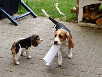 Guck und so klaut man sich das Papier . . .