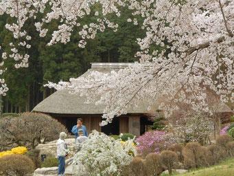蝶+島+桜=春