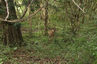 im grünen Unterholz