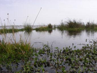 Schwimmender Pflanzenteppich