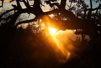 Corina Kessler, Sternenberg Sonnenuntergang zwischen Bäumen