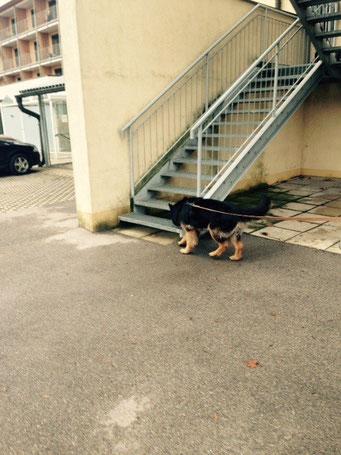 Schitt, die Spur führ auf die Treppe.... - Bravo Naomi
