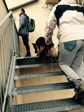 Jaska ist noch nie eine Gittertreppe raufgegangen - im Arbeitsmodus kein Thema :)