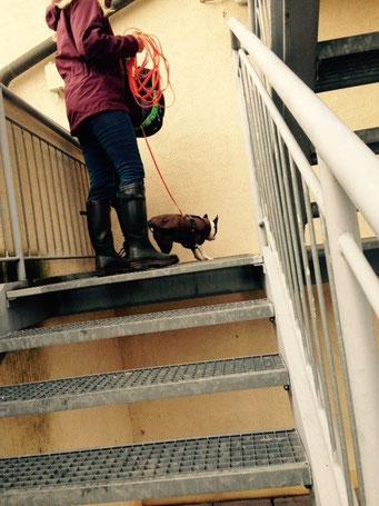 Trotz kleine Pfötchen - rauf auf die Feuertreppe - Super Ginger!!!!