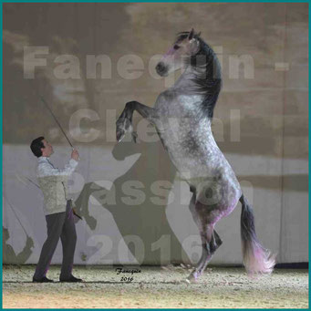 Cheval Passion 2016 - Spectacle M. I. S. E. C. - Vincent LIBERATOR