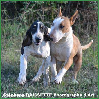différents races de chiens