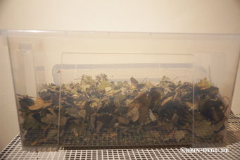 Blätter (verschiedene), Echinacea