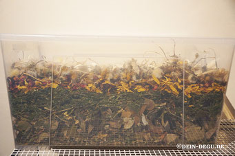 Ringelblumenblüten, Sonnenblumenblüten, Löwenzahnblüten, HF Blütenzauber First Class