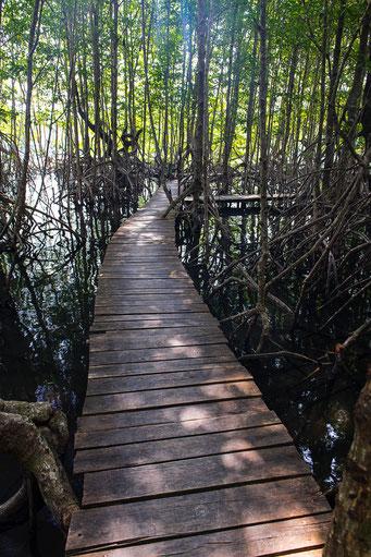 Magrovenwald - Botum Sakor Nationalpark