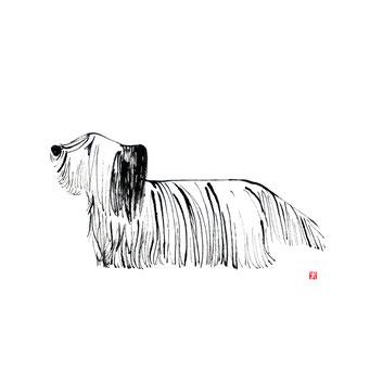 犬のイラスト スカイテリア