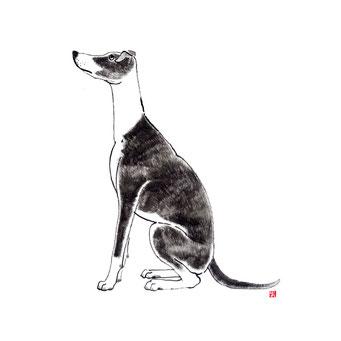 犬のイラスト ウィペット