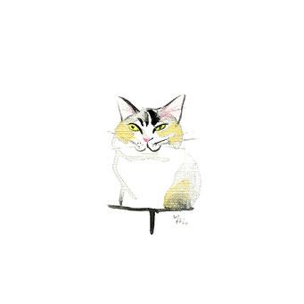 猫のイラスト ミケ