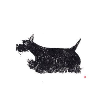 犬のイラスト スコティッシュテリア