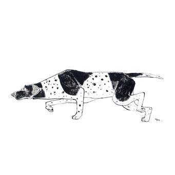 犬のイラスト ポインター