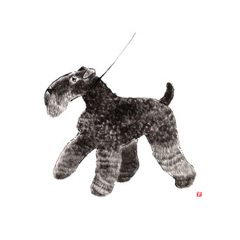 犬のイラスト ケリーブルーテリア