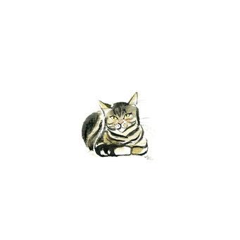 猫のイラスト 黒茶シマ